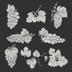 Collection of silhouette grapes, leaves on dark background