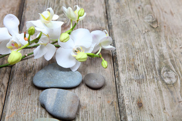 Acrylic Prints Daisies Zen stones and orchid
