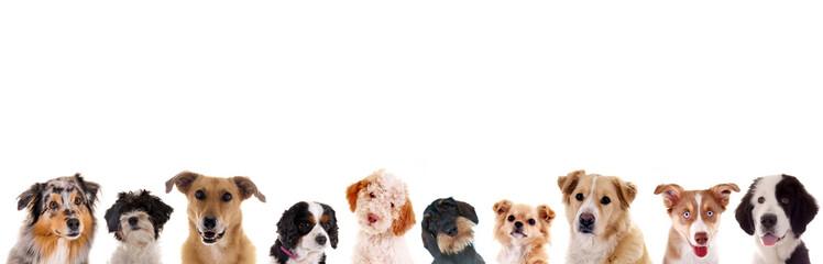 Verschiedene Hundeköpfe in der Reihe Fotobehang