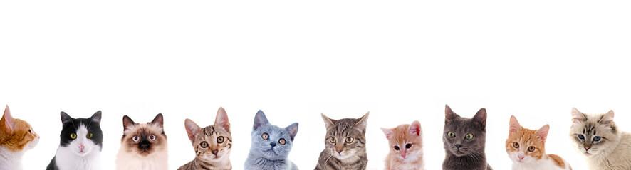 Verschiedene Katzenköpfe in der Reihe Fototapete