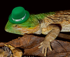 Green Hat Leprechaun Lizard.