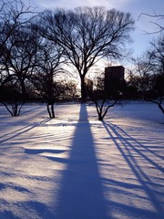 tree shadow in winter