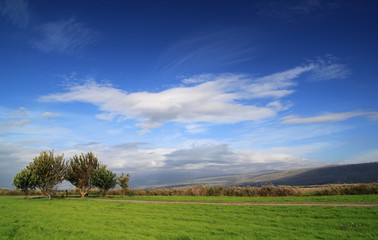 Wall Mural - Green Grass Field with Trees on Deep Blue Sky
