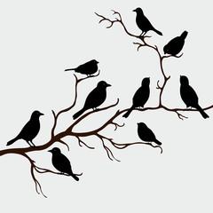 Cute black birds on a branch