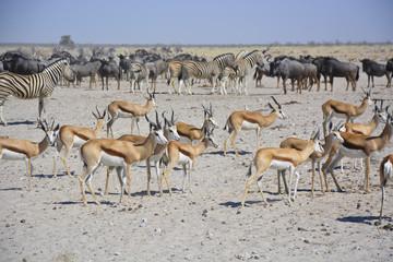 Wildlife at Sonderkop Waterhole, Etosha, Namibia, Africa