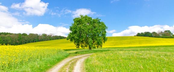 Feldweg im Frühling - Bodenseeregion - fototapety na wymiar
