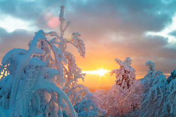 Wall Mural - Snowy winter landscape in sunset