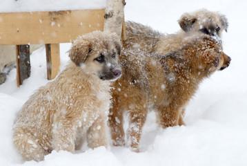 Shepherd puppy dog in the snow