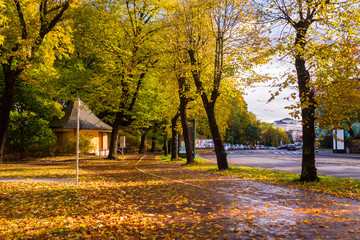 Park near road in the fall in the center of Riga