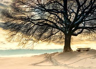 bench under a tree (97) - fototapety na wymiar