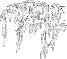 spring birch branches sketch isolated on white