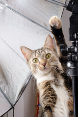 curious cat in photo studio