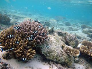 Undersea_III