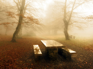 Wall Mural - picnic table in foggy forest