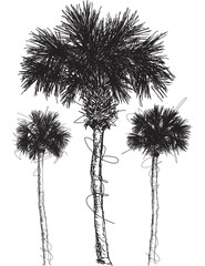 Palm tree sketches