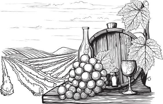 Winemaking illustration