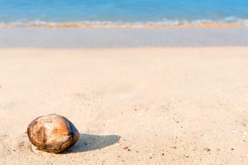 fallen coconut lies on a sandy beach