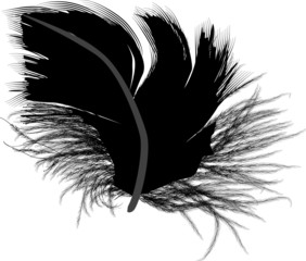 feather small silhouette isolated on white
