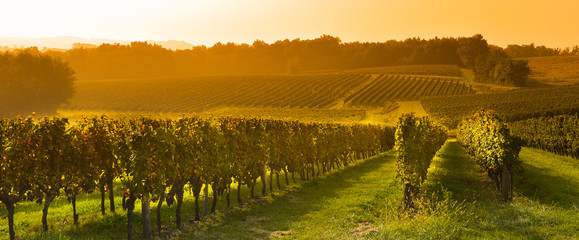 Foto op Textielframe Wijngaard Vineyard Sunrise - Bordeaux Vineyard