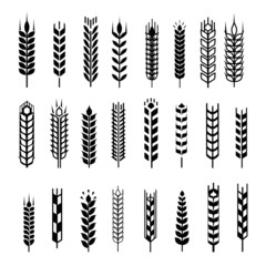 Wheat ear icon set, graphic design elements, black isolated on