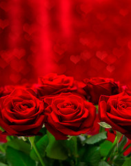 Red roses over valentines day background with hearts