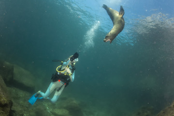 beautiful blonde girl and sea lion underwater