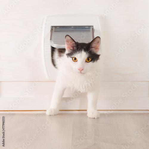 Cheap cat doors nz
