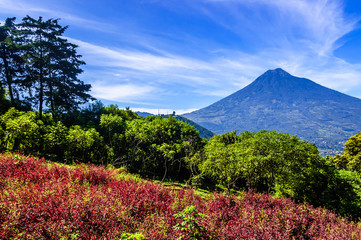 Flowering hillside & volcano view