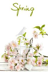 spring flowers in  birdcage