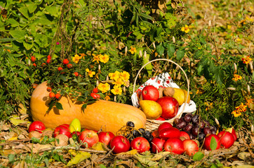Autumn still life of fruit and vegetables