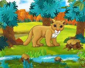 Cartoon scene - wild Asia animals - Caricature - cougar - illustration for the children