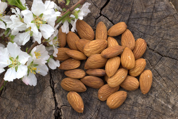 Almonds and almond blooming