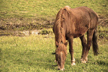 Horse at the pasture