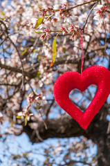 Red heart in blossoming almonds trees. Tenerife