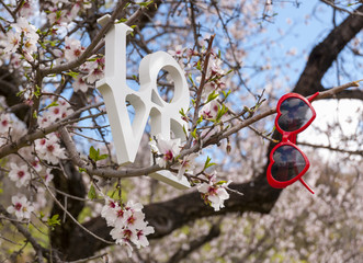 Love and heart shaped sunglasses in almonds trees