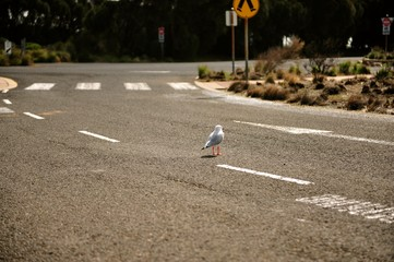 a lonely sea gull in the middle of road