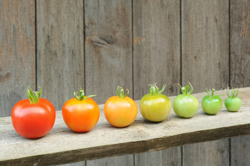 Evolution of red tomato - stages of development