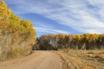 Fototapete - Trees in Vibrant Fall Colors along Gravel Road
