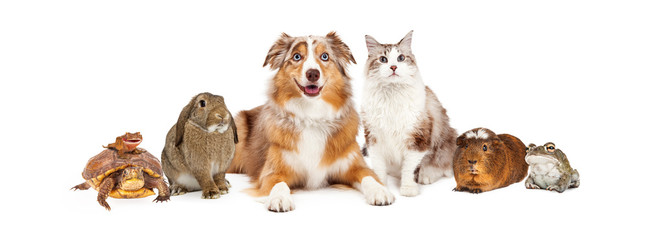 Domestic Pet Composite