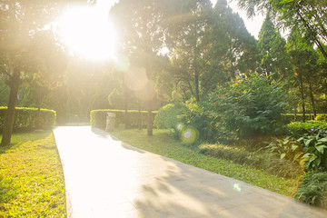 beautiful sunlight and shadow on the pedestrian path in a park