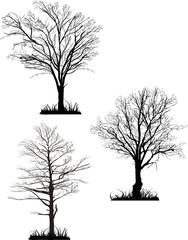 three bare trees silhouettes isolated on white