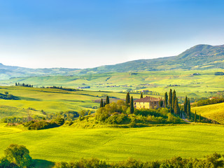 Garden Poster Vineyard Tuscany at spring