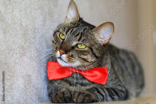 cat spraying poop