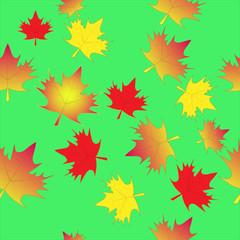 leaf maple isolated seamless background