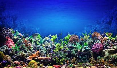 Photo sur Plexiglas Recifs coralliens Coral Reef