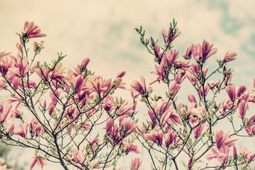Magnolia Flowers Against a Cloudy Blue Sky - Retro