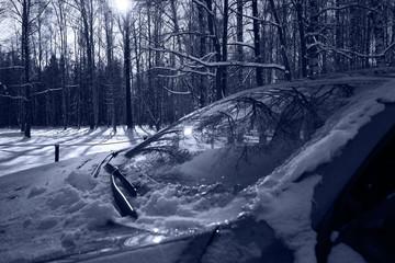 frozen winter forest snowfall