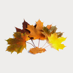 Arranged colorful maple leaves. Retro style.