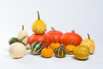 Different kinds of pumpkins. Pumpkin Varieties. Colorful pumpkins. Halloween.