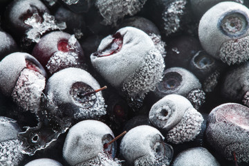 Frozen berries. Closeup. Macro. Blueberries in Ice